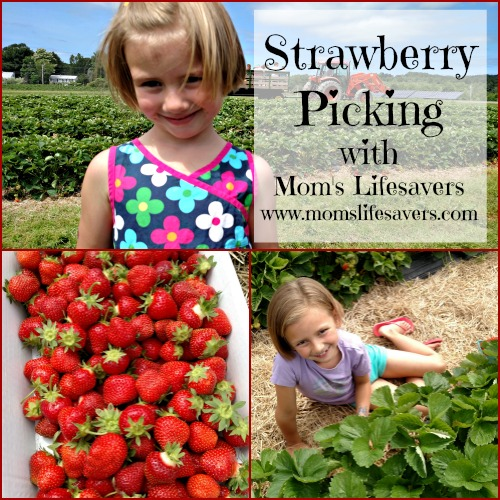 Summer Fun Strawberry Picking Mom S Lifesavers