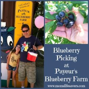 Payeur's Blueberry Farm